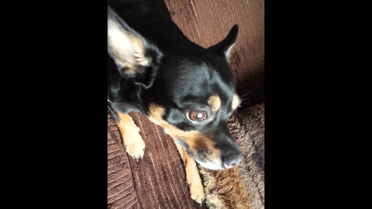 Epilepsie Beim Hund Was Sind Das Für Anfälle Youtube