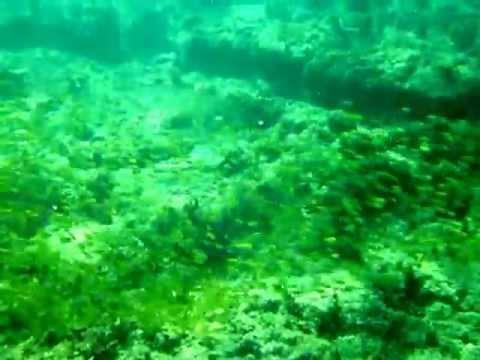 象耳幼魚魚群