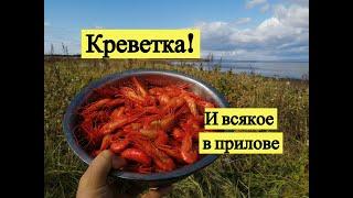 Креветка! И всякое в прилове / Saltwater shrimps at Sakhalin Island