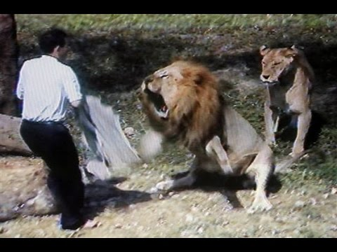 Bill Burr - Lions Attacking Video
