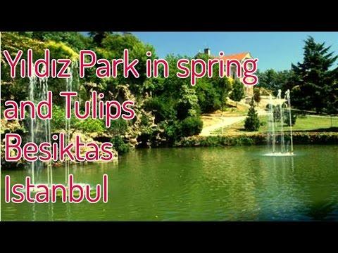 Yıldız Park in spring - Tulips  │ Beşiktaş - Istanbul