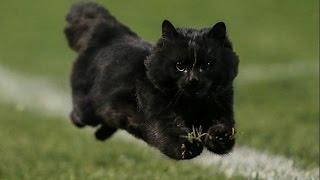 Офигенный черный котик выбежал на футбольное поле во время матча по регби