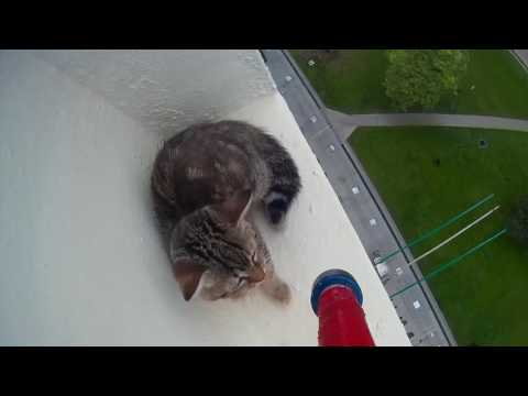SPCA Rescues Kitten