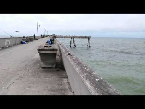 how to catch bait fish from a pier