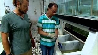 Aventura Selvagem - Aquários Amazônicos - Parte 2