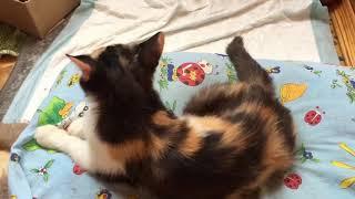 Как закапать капли в нос кошке. Лечение животных с насморком