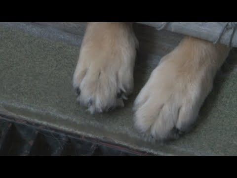 Animal Welfare Fills Animal Control Officer Positions