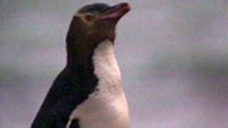 2001年 29分 世界各地の野生動物の生息地を訪れ、科学技術がいかに野生...