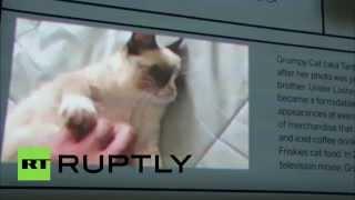 В Нью-Йорке проходит выставка «Как кошки захватили интернет»