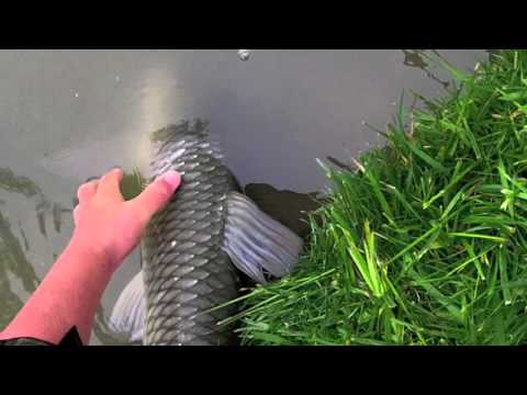 Fluval '06' Series (106, 206, 306 & 406) External Filter Range from YouTube · Duration:  5 minutes 22 seconds