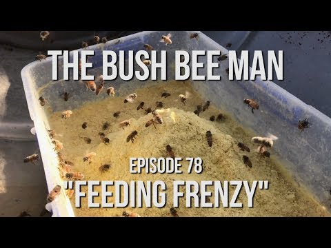 Feeding Bees Before the Almond Blossom - Episode 78: