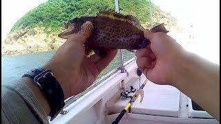 香港釣魚 hong kong fishing 好多怪怪魚