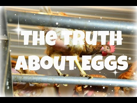 Why You Won't Want to Eat EGGS Again!!