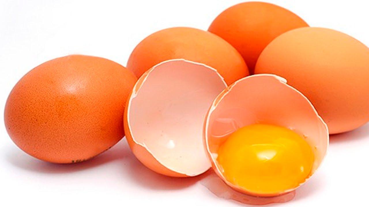 Resultado de imagem para imagens de ovos de galinha