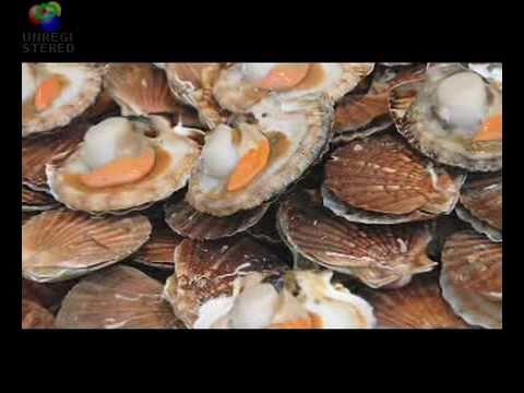 Santa Monica Seafood Plant Tour