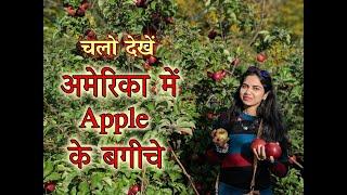 Apple Farm In USA   अमेरिका में सेब के बगीचे   Apple Picking   Pumpkin Picking