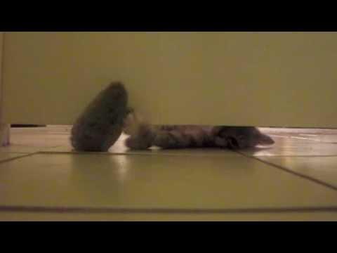 how to close a gap under a door