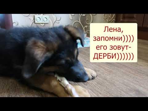 РАСТИТЕ ВМЕСТЕ С НАМИ- советы по кормлению щенка от заводчика...