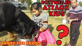 Do Rottweiler dog attack kids while having their food ? By Baadal Bhandaari || 9878474748