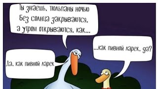 смешные видео поднимает настроение юмор смешно мужское женское однажды в России давай поженимся
