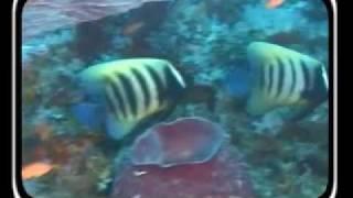 Scuba Diving Adventures in Asien