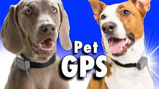 Whistle - ein PET GPS Tracker Review