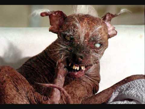 descargar fotos de animales feos