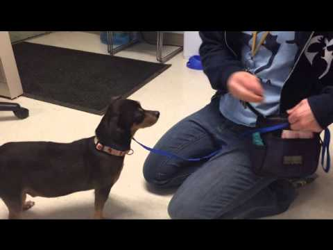 YCAS dogs: Teaching a dog to take treats gently