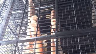 野毛山動物園 隣のアムール虎を威嚇するツキノワグマ