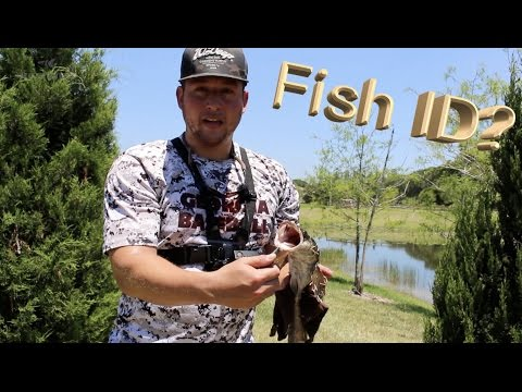 Easiest Baitcaster to Cast - First Snakehead Fish - Fishing with KastKing Speed Demon Baistcast Reel