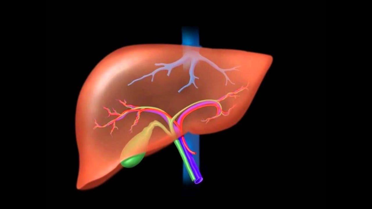 3  Accessory Organs
