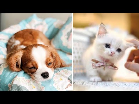 Aww - Funny and Cute Dog and Cat Compilation 2020