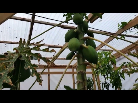 Tropical greenhouse and garden update
