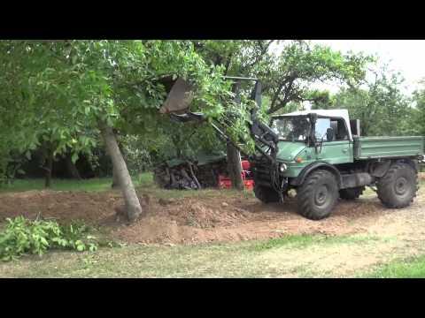 Unimog 406 legt Baum um