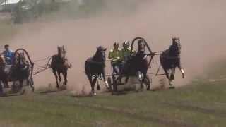 1) Русских троек. Краснотуранск 2015(Лошади-Horse–Animal-racing-конь-смотреть-онлайн-скачки)