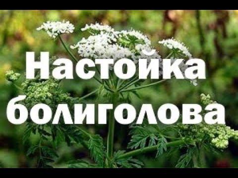 Медицина (БОЛИГОЛОВ  - лечение онкологических заболеваний )