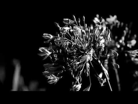 Черно-Белое  смотреть онлайн - 20 Марта 2016