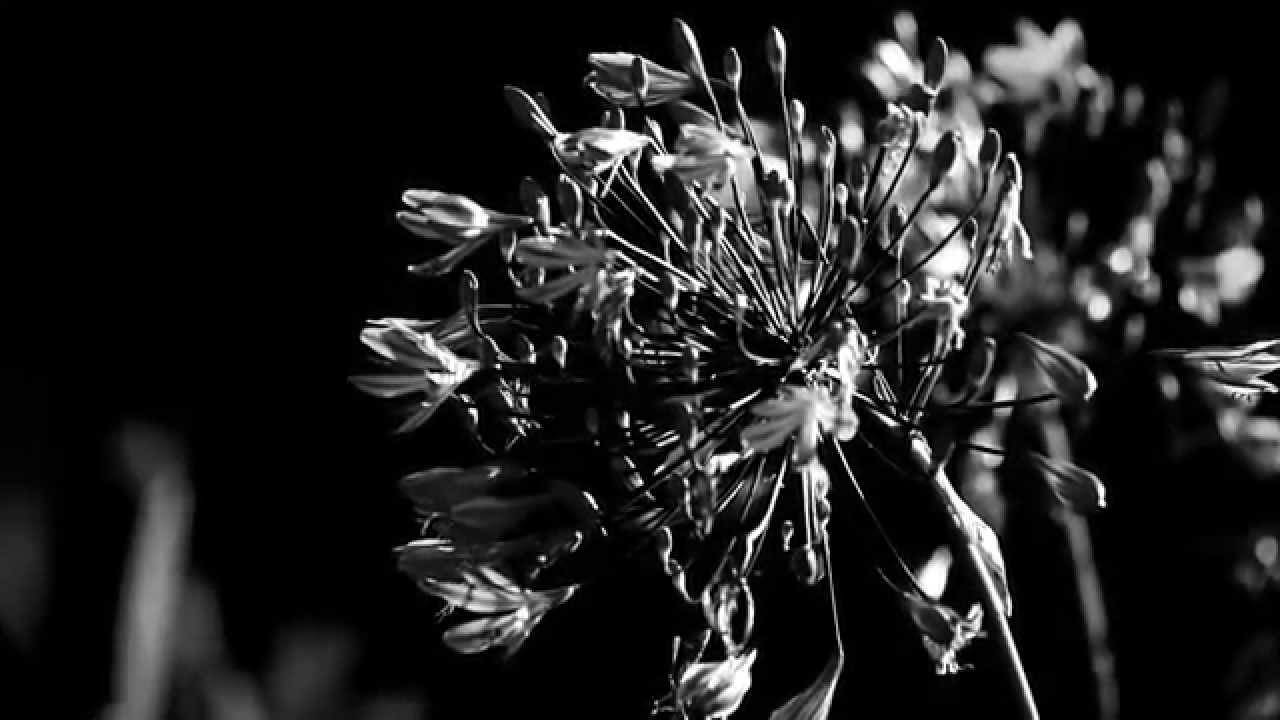чёрно белое кино фото