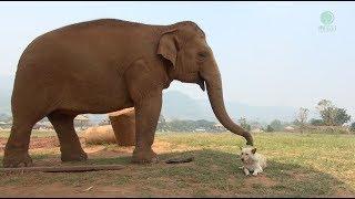「ちょっとそこ通してもらっていい?」「あ、うん、どうぞ」タイのゾウと犬たちの間に流れるまったりゆったり平和な時間