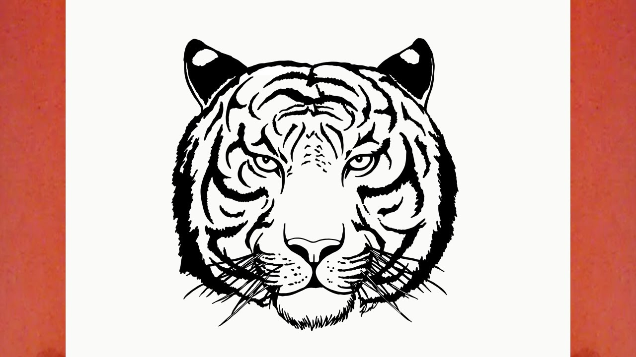 Comment dessiner un tigre animaux youtube - Comment dessiner un tigre ...