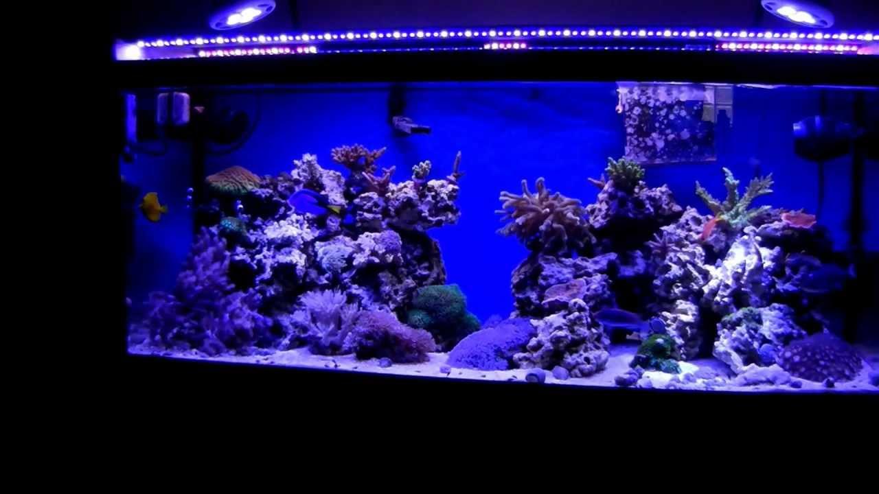 75 Gallon Reef Tank Ecoxotic Led S Par38led Youtube