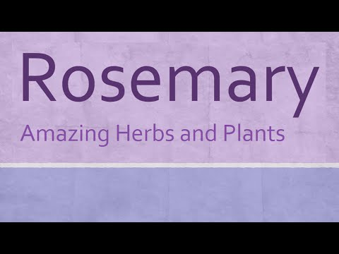 Rosemary Amazing Herb - Health Benefits of Rosemary - Amazing Herbs and Plants
