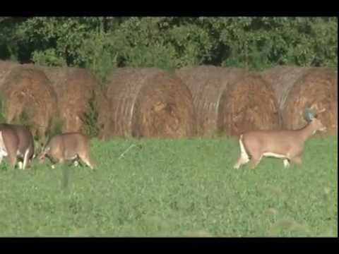 Hunting God's Country Season 3 Episode 1 Bonnie Kansas Deer Hunt