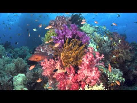 Life Underwater - Piano