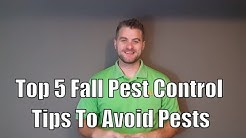 Top 5 Fall Pest Control Tips To Avoid Pests