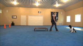 Celia (springer Spaniel) Dog Training Demo Minneapolis