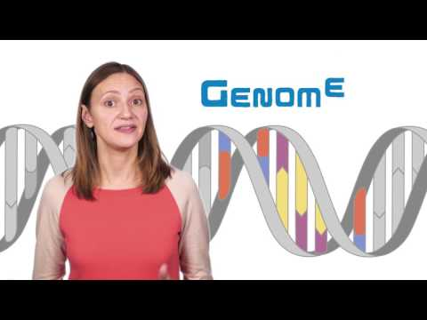 What is the difference between genetics and genomics?