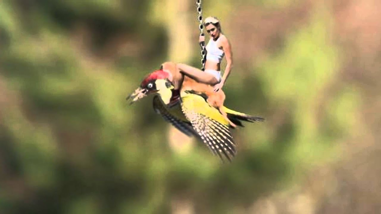 Weasel Hitches A Ride On Woodpecker