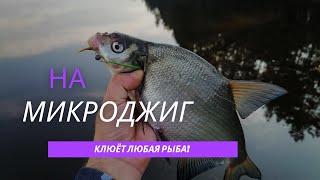 На микроджиг можно поймать любую рыбу Ловля карася леща щуки окуня