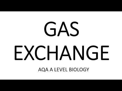 GAS EXCHANGE- AQA A LEVEL BIOLOGY + EXAM QUESTION RUN THROUGH